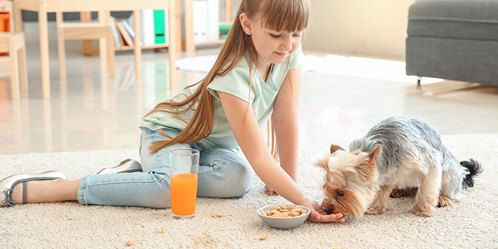 Girl-Feeding-Dog-wMess-on-Carpet_1468223057_700x350