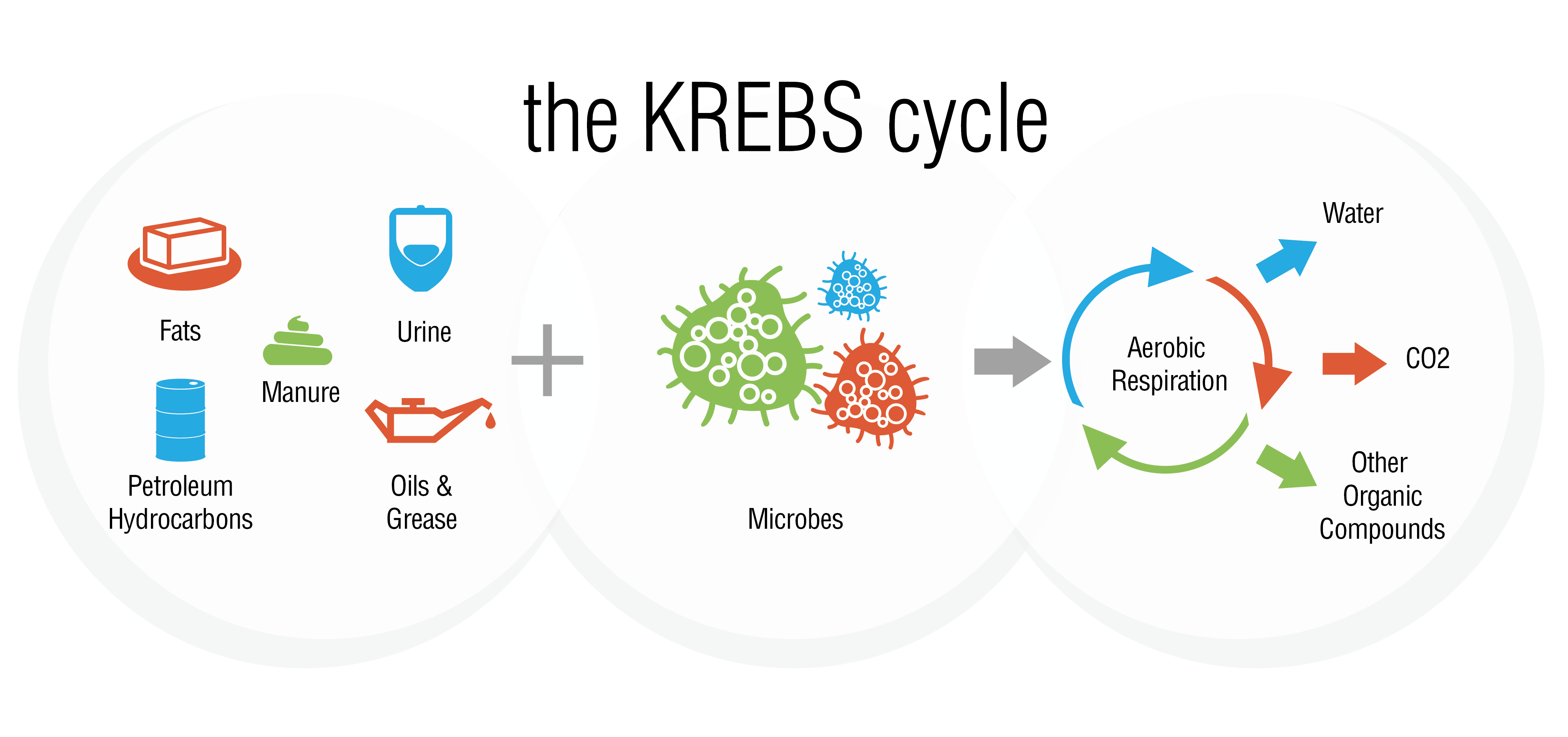 Krebs Cycle Illustration Web
